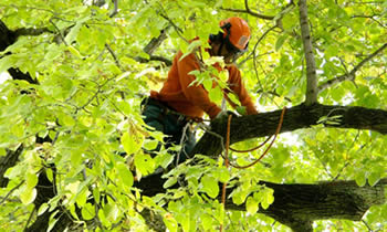 Tree Trimming in Philadelphia PA Tree Trimming Services in Philadelphia PA Tree Trimming Professionals in Philadelphia PA Tree Services in Philadelphia PA Tree Trimming Estimates in Philadelphia PA Tree Trimming Quotes in Philadelphia PA