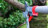 Tree Pruning Services in Philadelphia PA